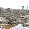 2011年3月29日 仙台市荒浜地区