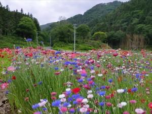 活動記録写真〜雄勝花物語〜_2012_9-5
