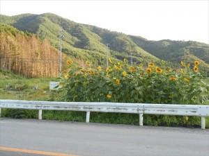 活動記録写真〜雄勝花物語〜_2012_8-26