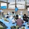 4月30日 仙台市六郷中学校避難所 草花植え付けプランター40個