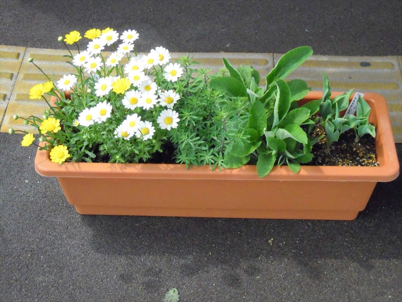 野菜の種と培養土6袋支援