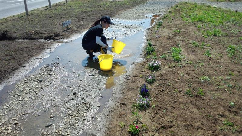 魚町中央分離帯の花壇の整備(雑草除去&種まき&肥料まき)
