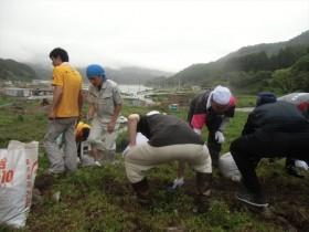 雄勝ローズファクトリーガーデンへの支援活動_2015_7-17