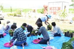 石巻大川地区支援活動_2015_8-2