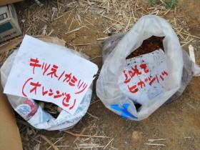 雄勝ローズファクトリーガーデンへの支援活動_2015_7-16