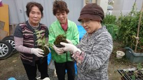 復興住宅地、笹屋敷にて苔玉の支援