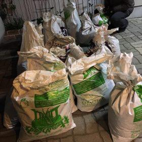 桂島にスイセンの球根植え