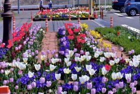 仙台市錦が丘の花壇