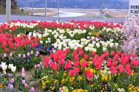 大川地区の三角花壇