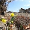 2011年4月12日  仙台市荒浜地区