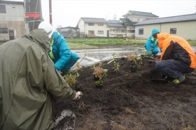 仙台「みんなの居久根」プロジェクト植樹_2015_11-10