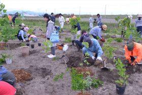 仙台東部地区海岸公園での植樹